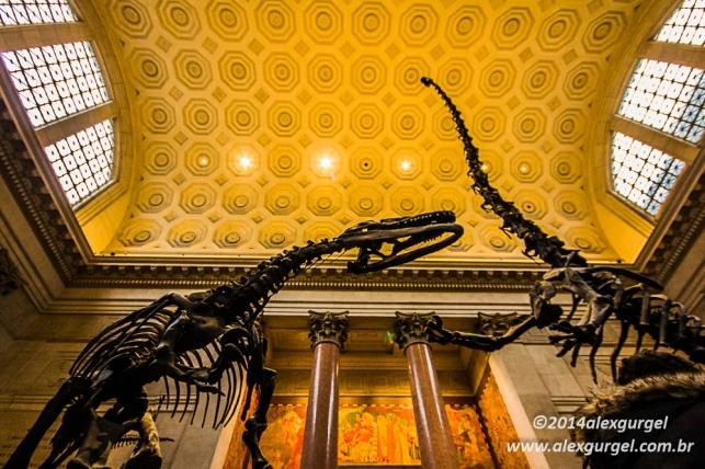 Esqueletos de dinossauros dá boas-vindas aos visitantes, na entrada do Museu Americano de História Natural.
